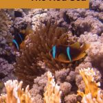 Diving The Red Sea - Pinterest