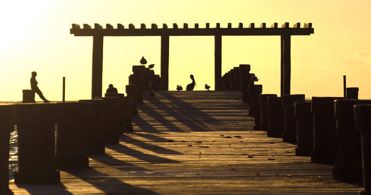 A silhouette of a pier in Mexcico with a man, a pelican and some seagulls