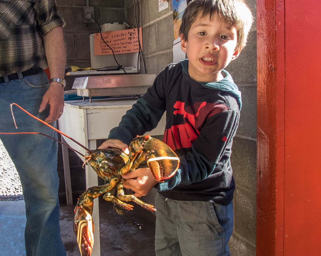 Boy holding a lobster at Sansomr and Sons Lobster Pool in Twillingate Newfoundland