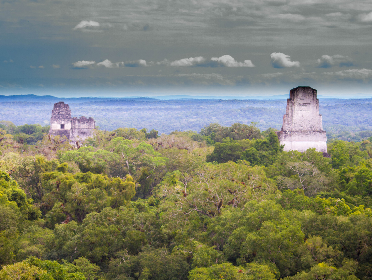 Mayan pyramids break through the top of the forest canopy in Guatemala