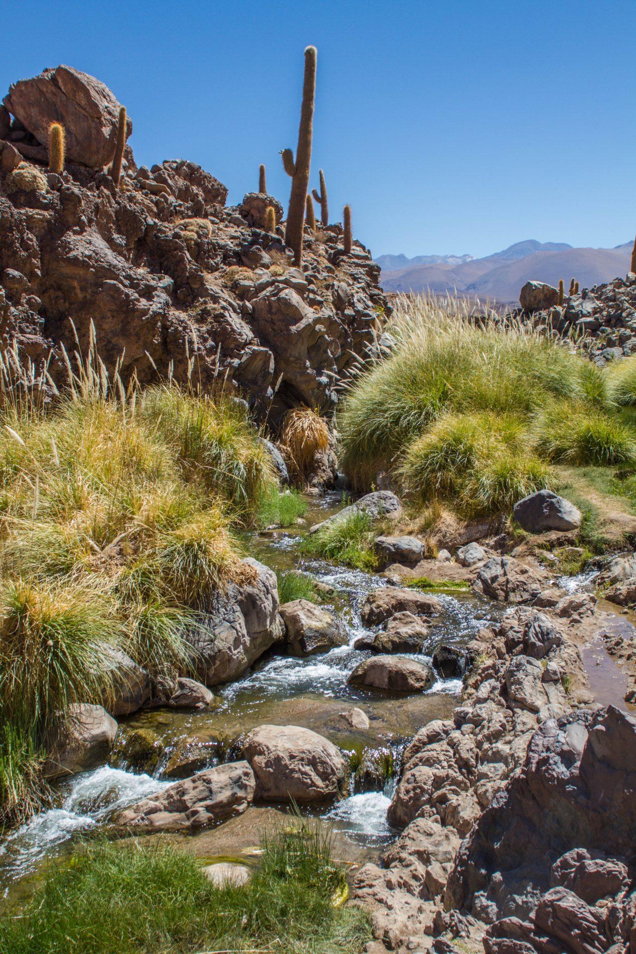 A river runs through the cactus forest.