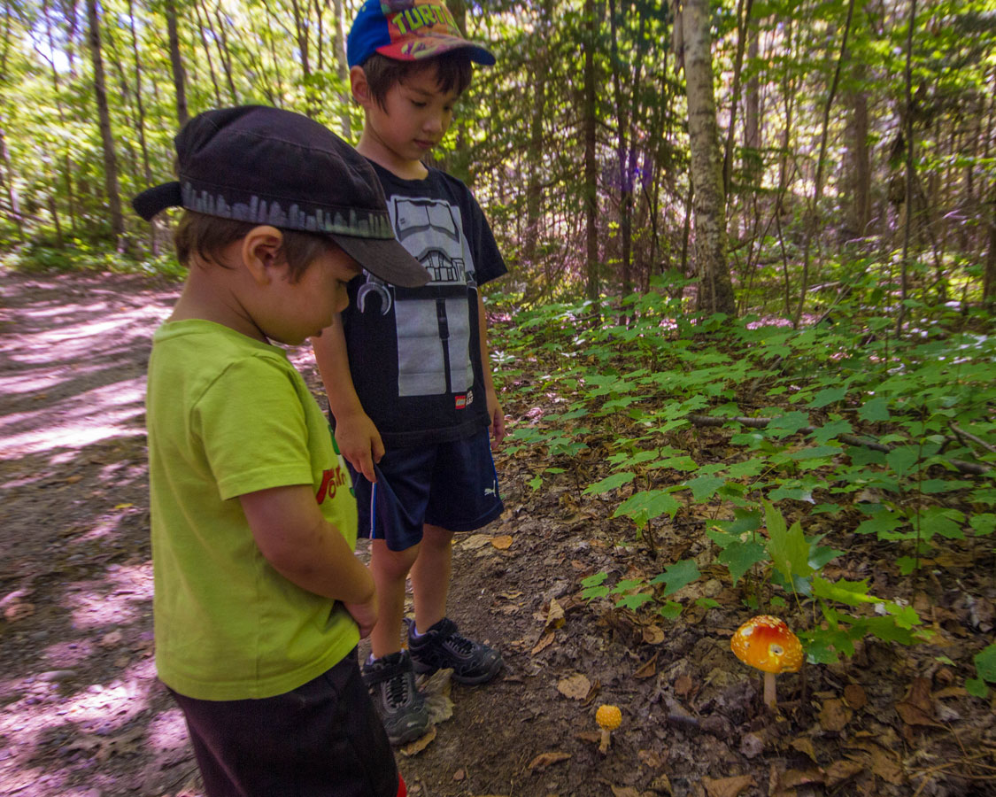 Two young boys look at colourful mushrooms on a hiking trail - Hiking the Crack in Killarney with Kids