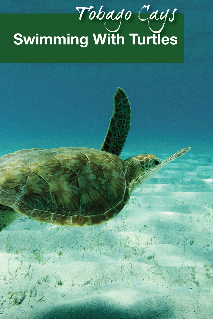 tobago-cays-swimming-with-turtles-pinterest