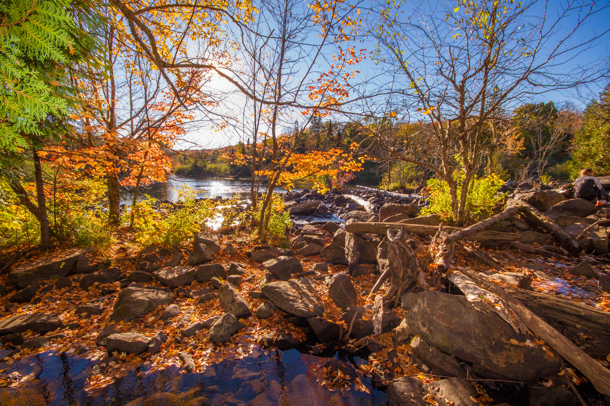 Colorful leaves reflect in pools along Ragged River in the Muskoka region of Ontario