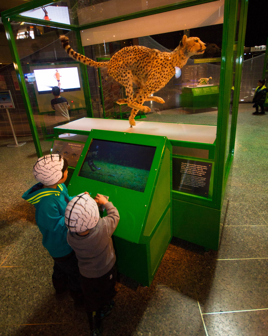 Two young boys look at a cheetah display at the Bio Mechanics exhibit at the Ontario Science Centre