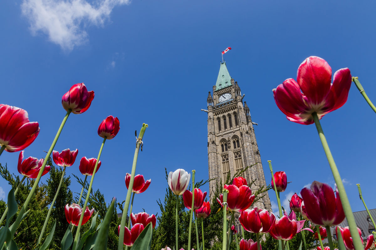 Parliament buildings in Ottawa Ontario viewed from a garden of Tulips are one of the most amazing places in Canada