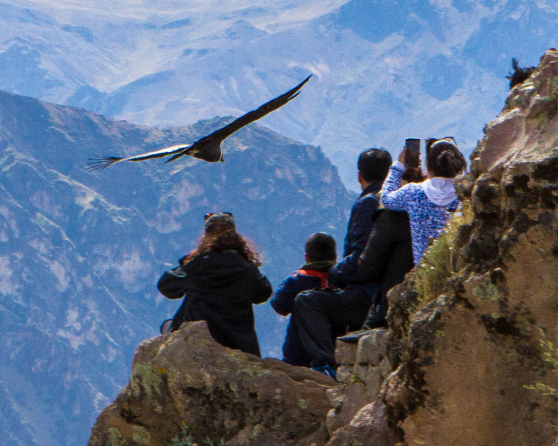 An Andean Condor flies close over the heads of photographers at Cruz del Condor shooting Andean Condors in Colca Canyon with kids