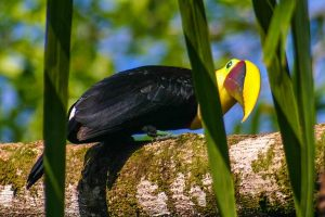 Travel with kids to Costa Rica