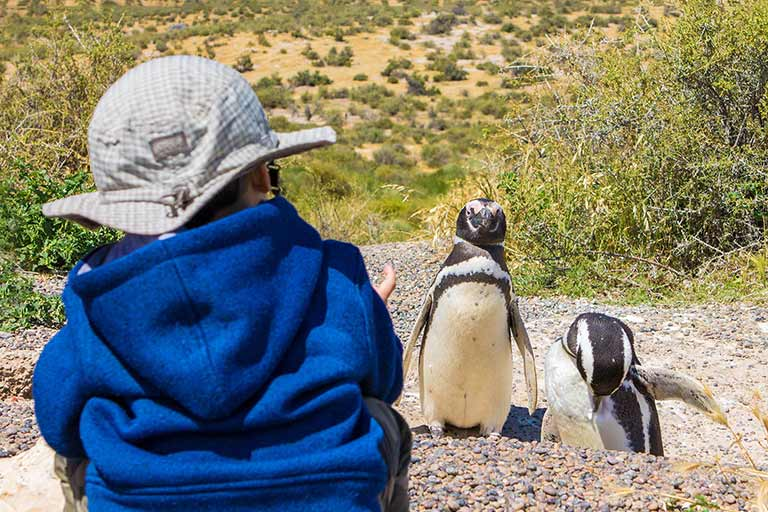 boy walking with penguins in Punta Tombo Argentina
