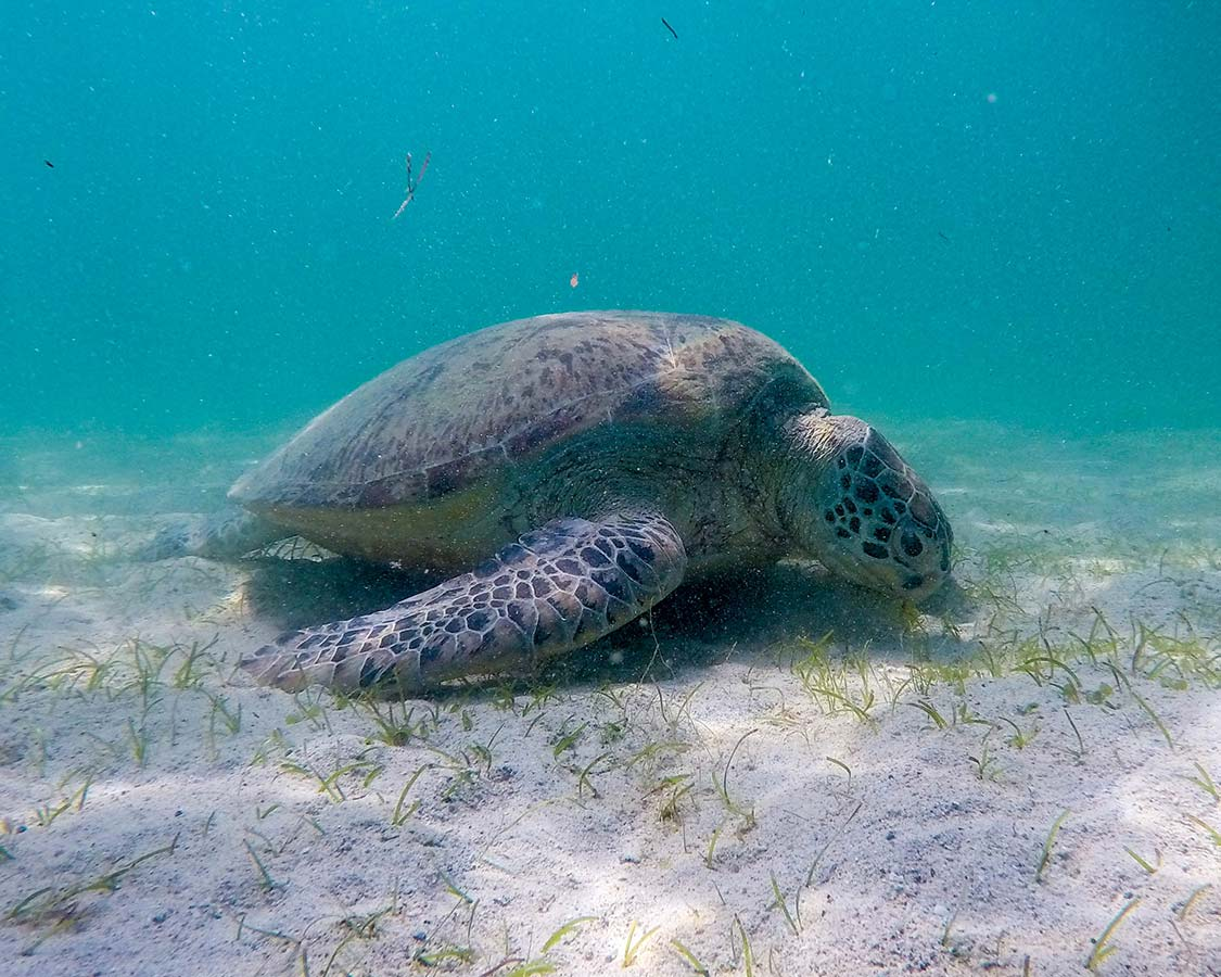 Things To Do in San Vicente Palawan - Swimming with Turtles in San Vincente Palawan