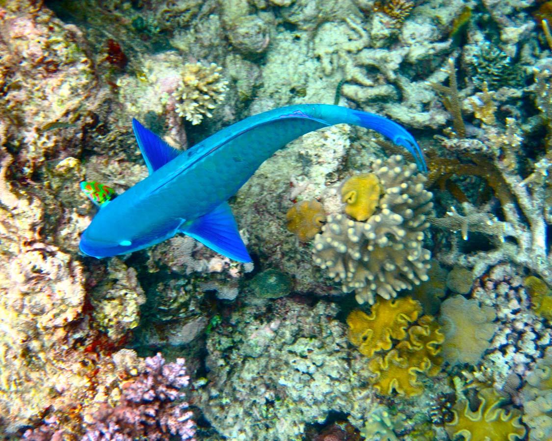 Great Barrier Reef on an East Coast Route Road Trip in Australia