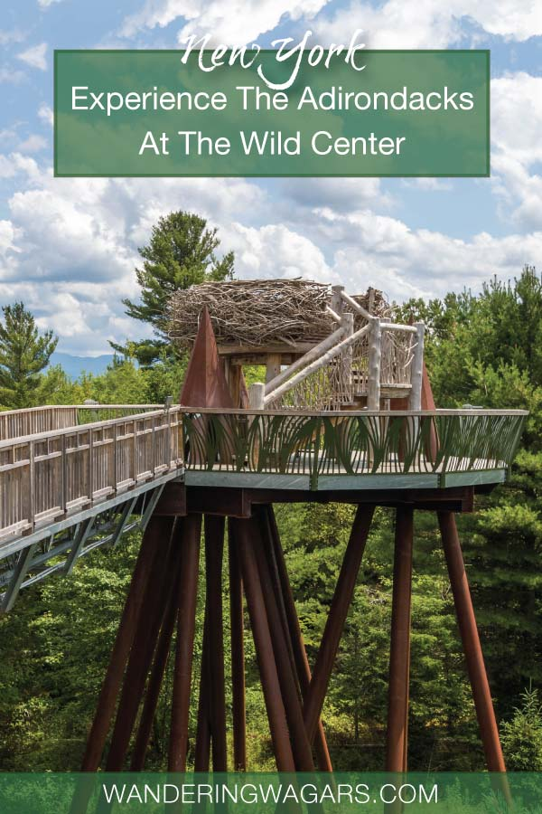 Experience the Wild Center New York and discover why this is the Wildest Adirondack Adventure Center in Upstate New York.