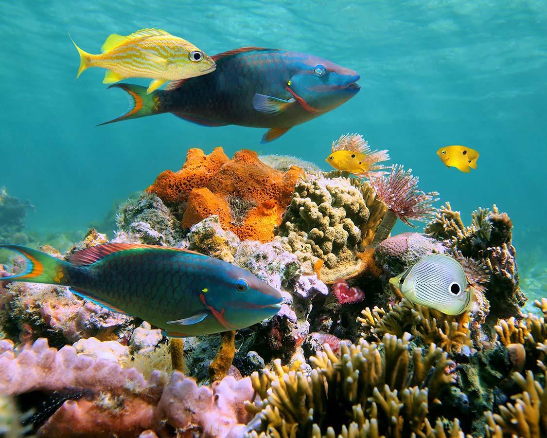 Best diving destinations in the Caribbean Roatan Honduras undersea life