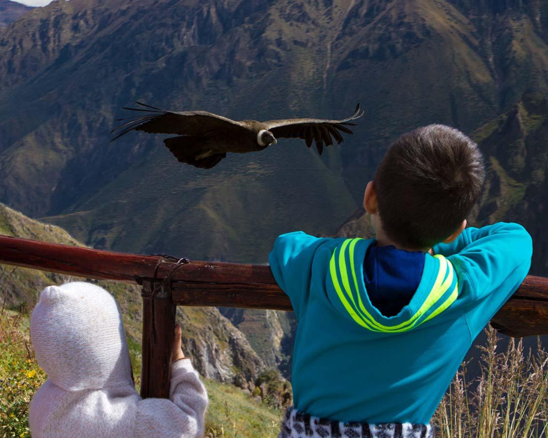 Wildlife Experiences For Families Condors In Peru