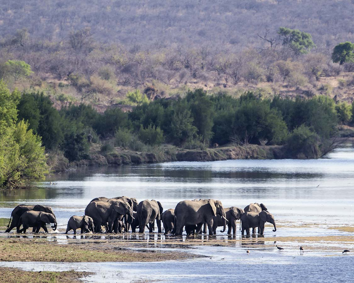 Wildlife-experiences-for-families-Elephants-in-Kruger-National-Park