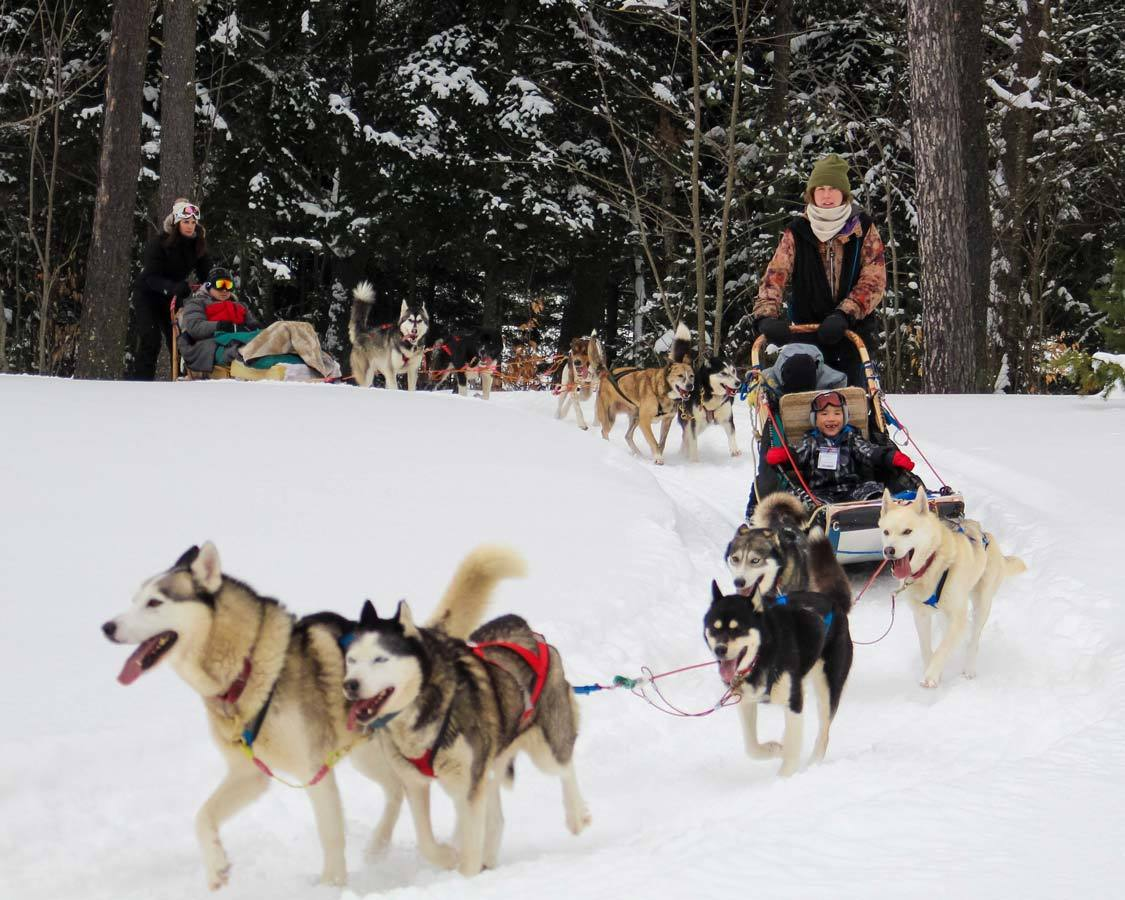 Arrowhead Provincial Park dog sledding