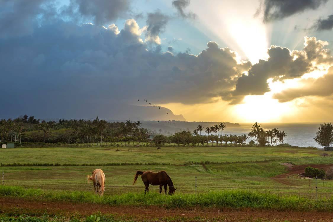 The Best Kauai Sunset Kauai With Kids