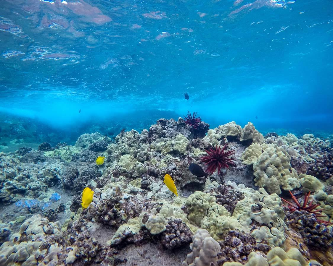 Molokini Snorkel Tour Coral Reef