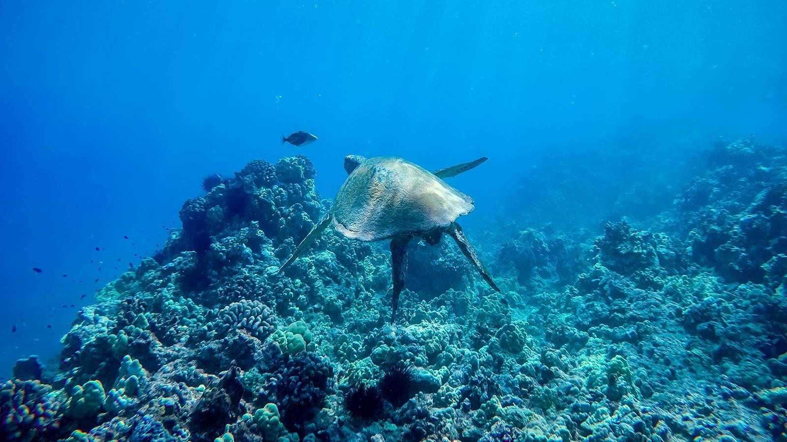 Molokini Snorkel Tour