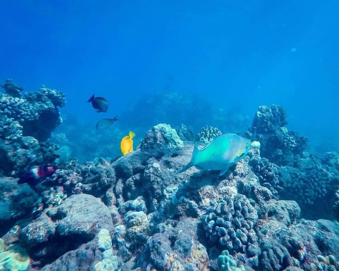 Snorkeling in Maui Hawaii itinerary
