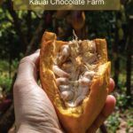 The Best Kauai Chocolate Tour