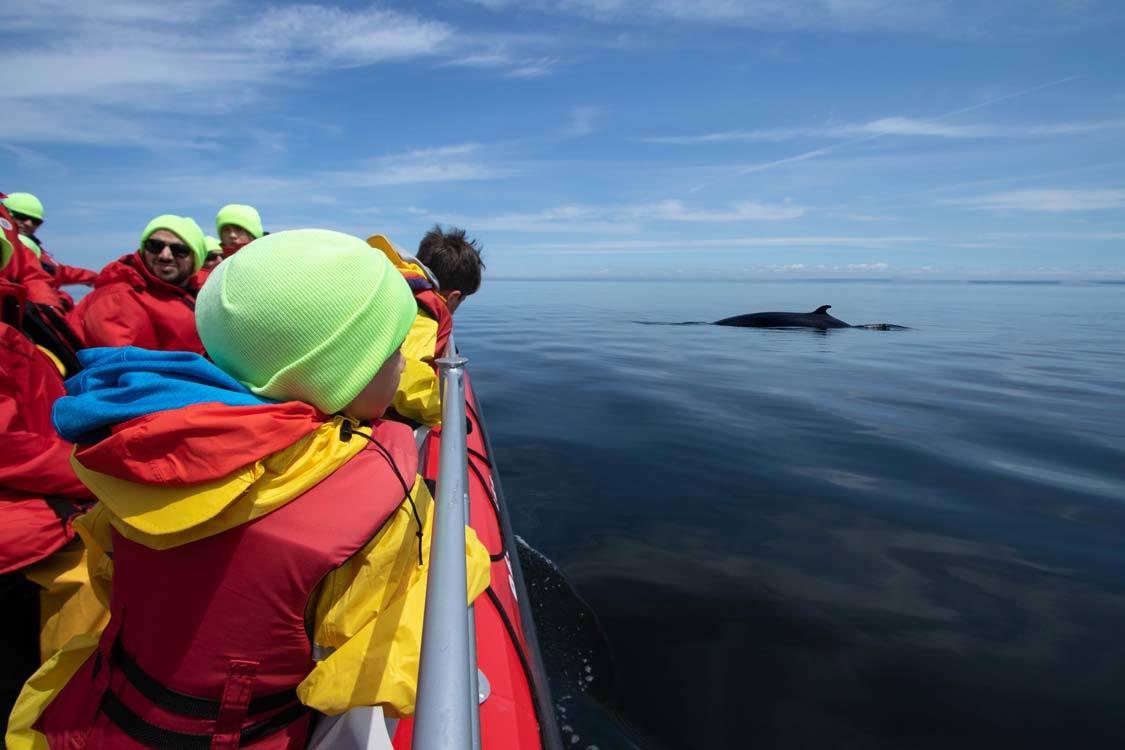 Quebec Aboriginal Tourism Whale Watching Vacances Essipit