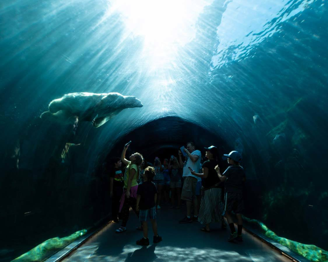 Winnipeg With Kids Assiniboine Zoo Polar Bear Tunnel