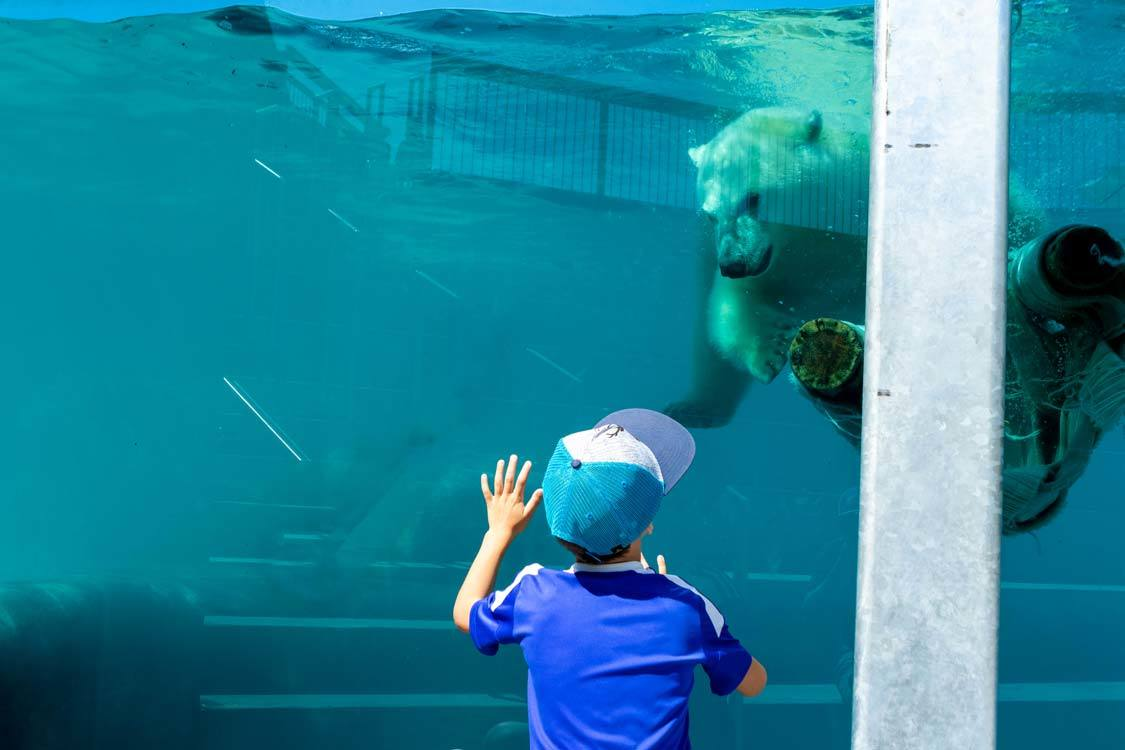 Polar bears at Zoo Sauvage in Saguenay-Lac-St-Jean Quebec