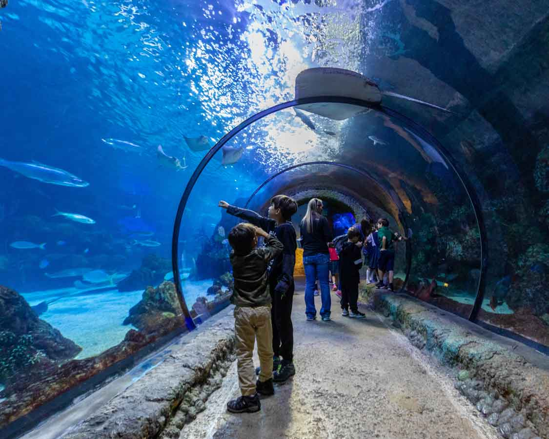 Downtown Denver Aquarium In Colorado For Kids