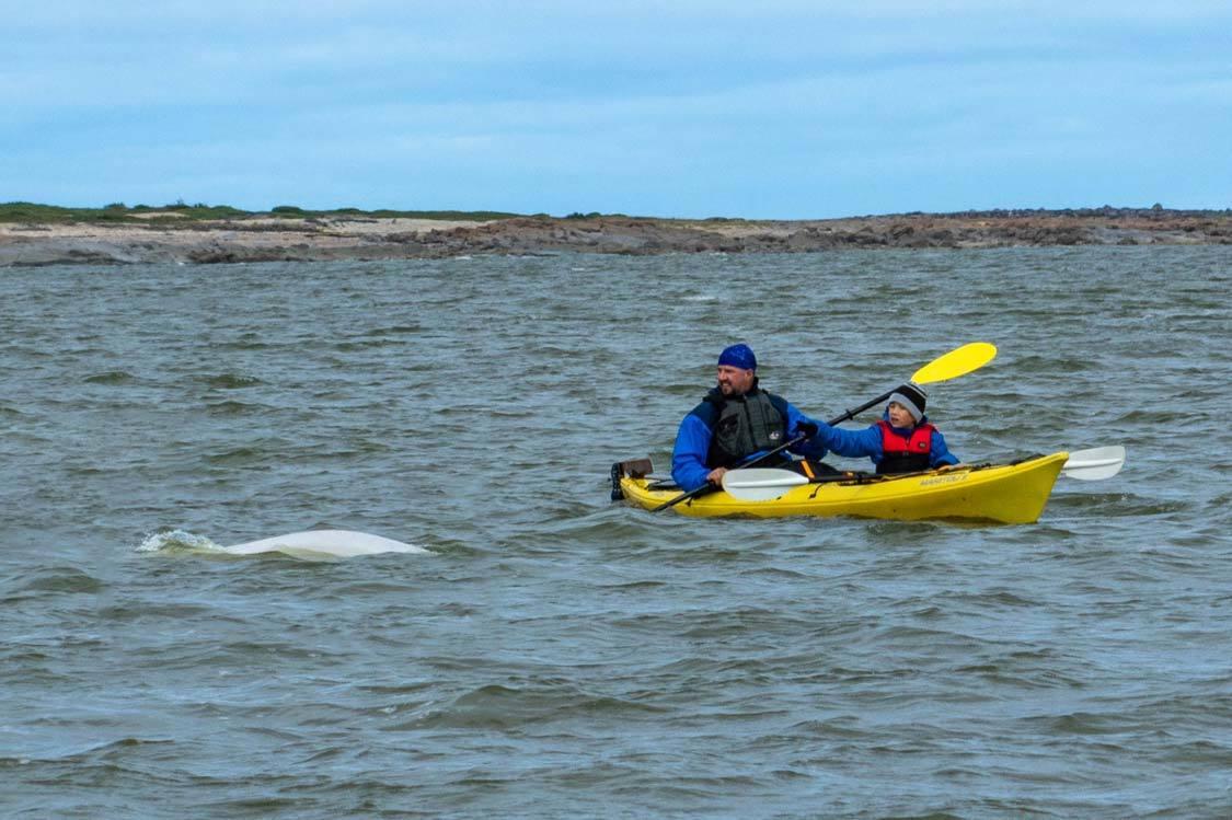 Wandering Wagars in Churchill Manitoba