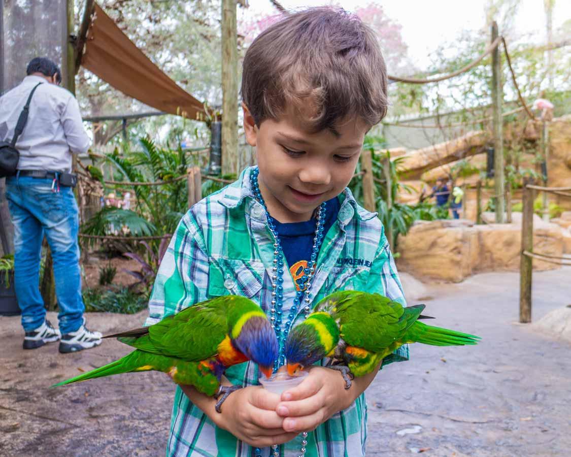 child feeding Parakeets in Busch Gardens Tampa