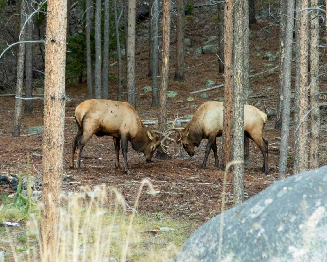 Wildlife in Rocky Mountain National Park