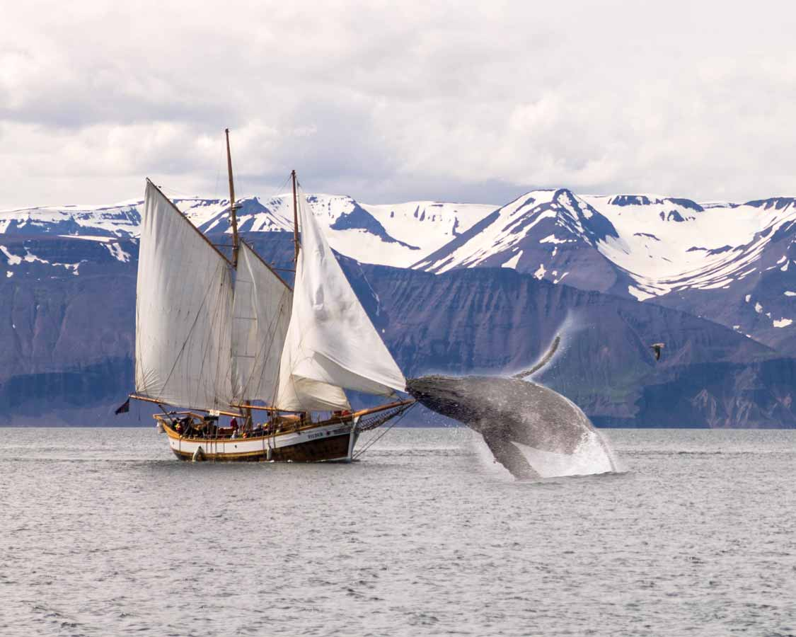 Packing List For Iceland Whale Watching