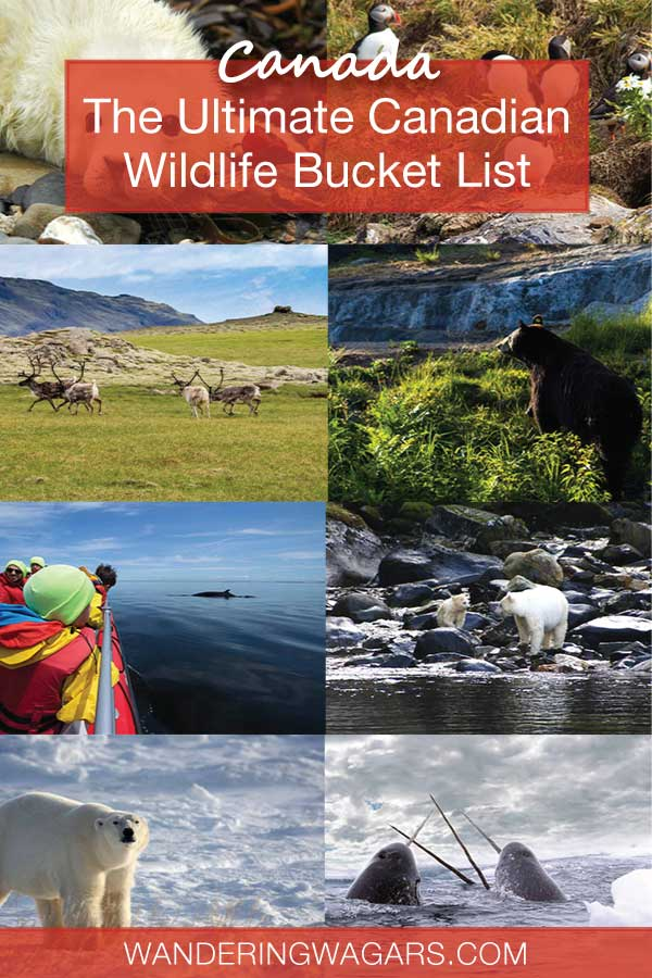 Wildlife In Canada Bucket List