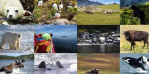 The Ultimate Wildlife In Canada Bucketlist