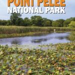 things to do in Point Pelee National Park