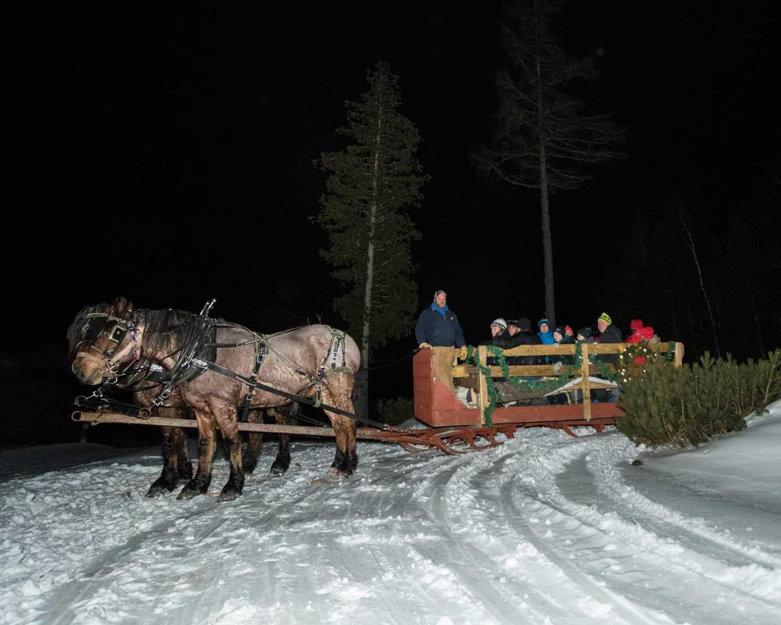 horses pull a lantern-lit carriage across the snow through a forest