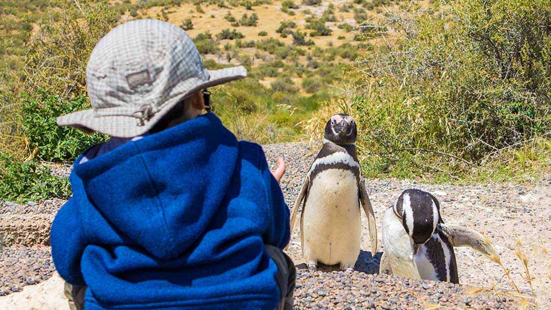 Young boy looking at Magellenic Penguins in Punta Tombo Argentina