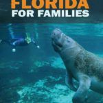 Man snorkeling with Manatees at a Florida State Park