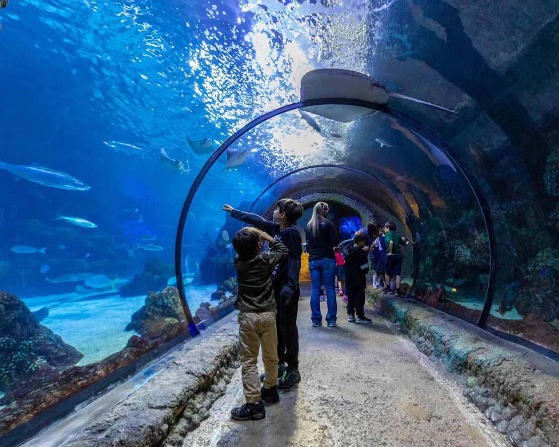 Children in a glass tunnel at the Denver Aquarium