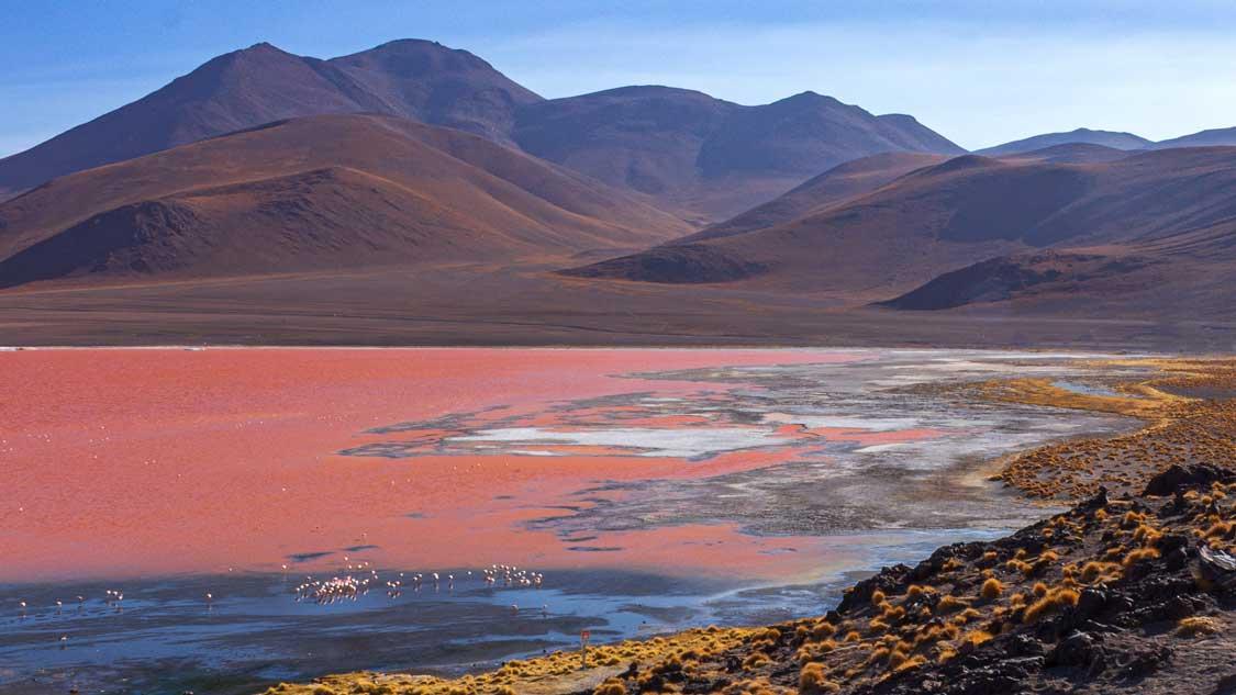 Flamingos in a lake in the Atacama Desert