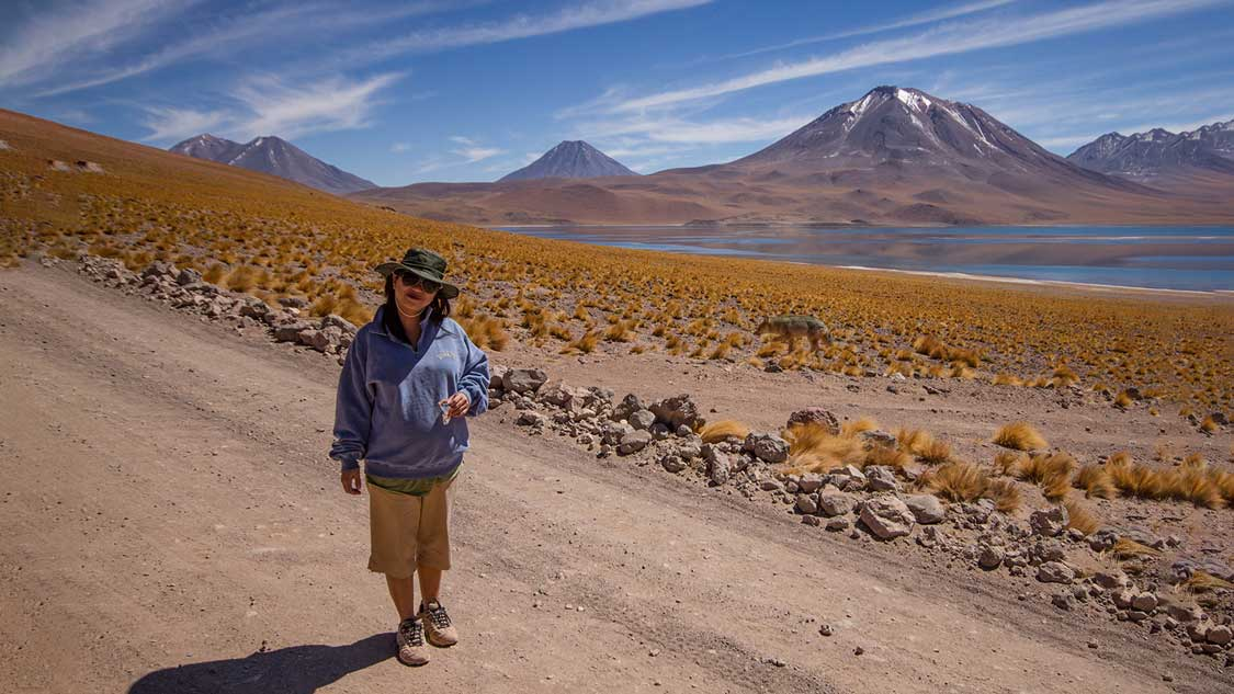 A woman stands by Lagunas y Mystiques in the Atacama as a fox strolls by