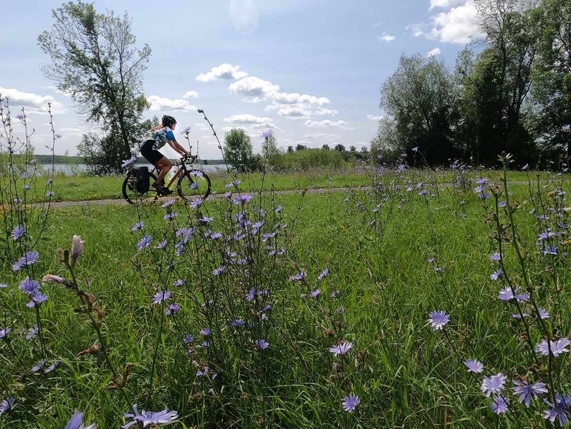 Woman cycling through a field of flowers along the St. Lawrence River in Ontario