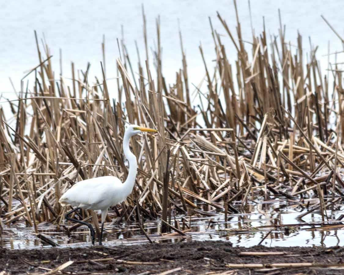 Birding at Hillman Marsh Conservation