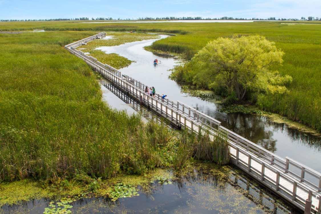 Marsh boardwalk at Point P